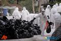 '전국 최대 오리산지' 전남 영안 오리농장서 AI...