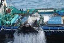 미국, 한국 예비 불법 어업국으로 지정…2013년...