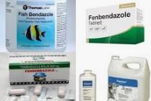구충제 '이버멕틴' 코로나 치료 효과 있다?…